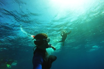Australia Whale Shark Tour Ningaloo