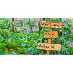 Small Crop Of Berns Garden Center