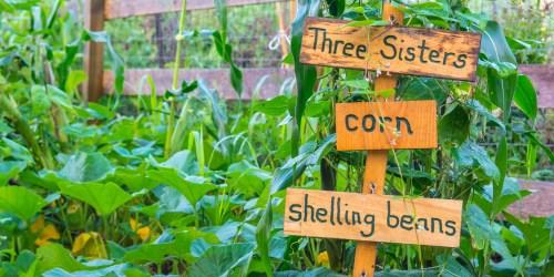 Medium Of Berns Garden Center