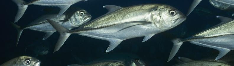Cape Cod Fishing Report - Tides