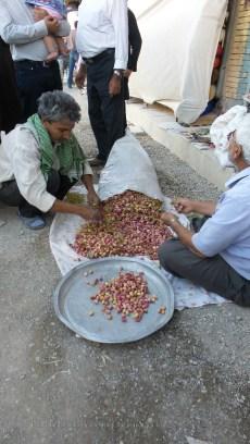 Pistachios - freshly harvested in Kerman