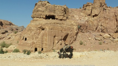 Local transport for tourists in Petra