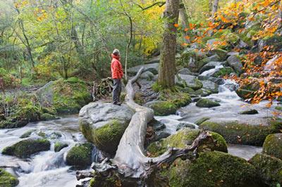 Beck Falls