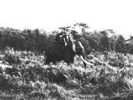 Elephant ride Chitwan