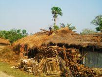 Tharu village at Chitwan