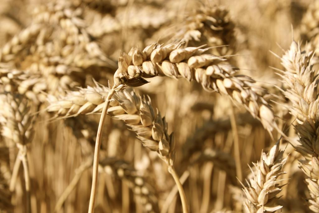 4 Myths About Complex Carbohydrates and the Low Carb Truth