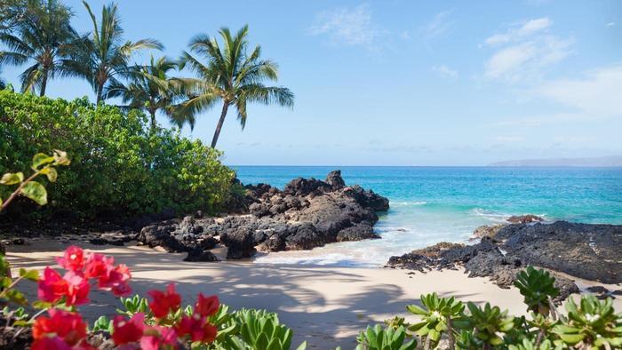 Under The Sea Wallpaper Hd Will Hawaii Beach Its Latest Online Poker Thrust Tourists
