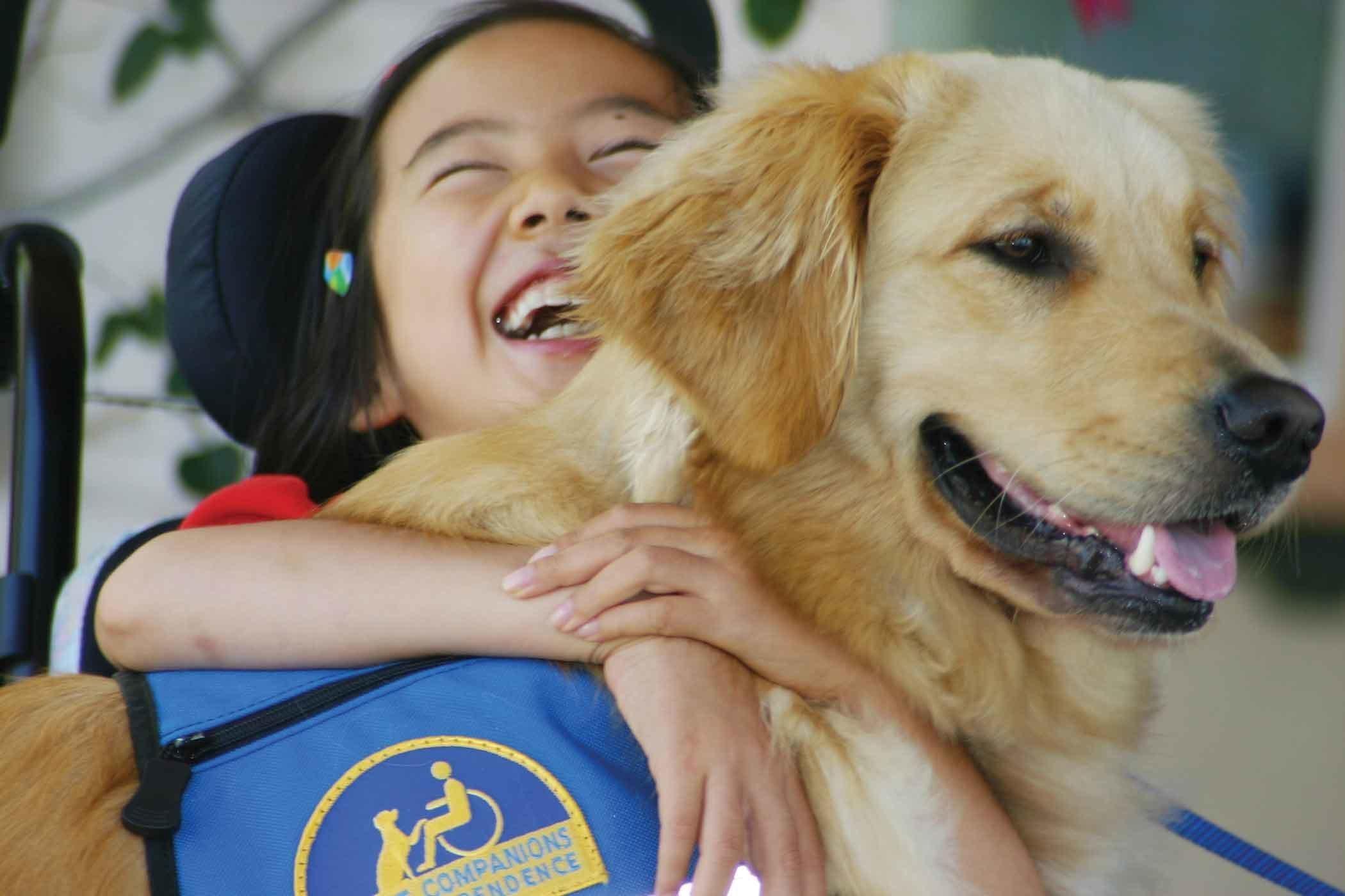 Image For Golden Retriever Foundation