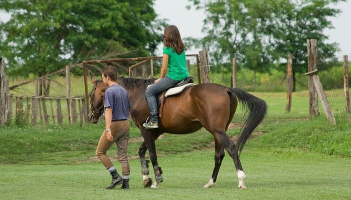 ... How To Become A Horse Groomsman\/Woman   Riding Instructor Cover Letter  ...