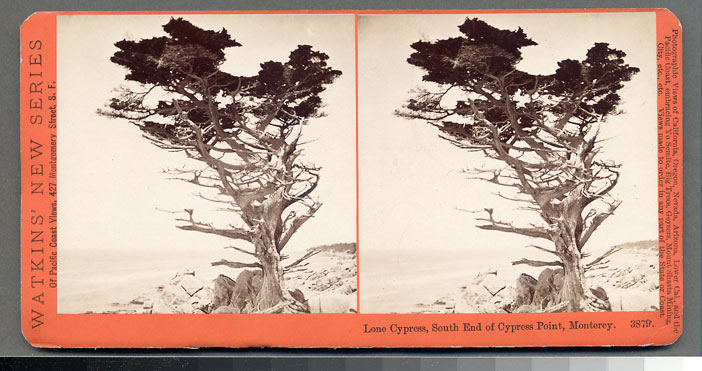 Watkins #3879 - Lone Cypress, South End of Cypress Point, Monterey, Cal