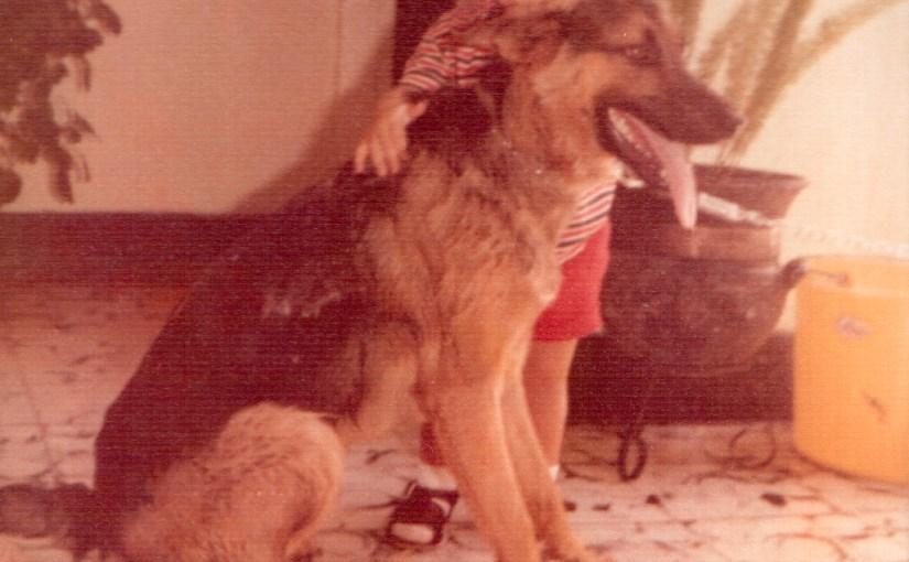 Gamín, mi primer perro, y Nerón