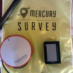 Mercury pettorina