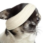 dog-bandage