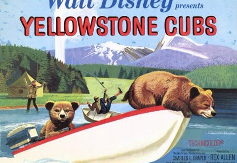 yellowstonecubs480