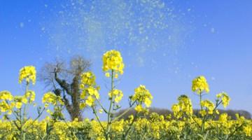 Spring, pollen, flowers, blooms