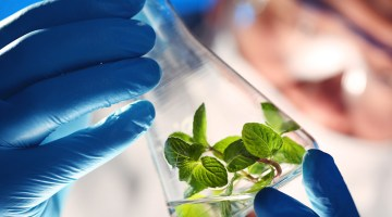 biobased chemistry, biobased, chemistry, biochemistry, plant, test tube, scientist