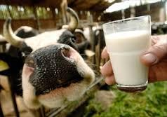 Latte vaccino