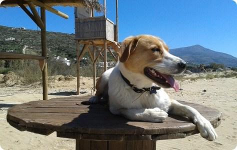 Organizzare le vacanze con il cane