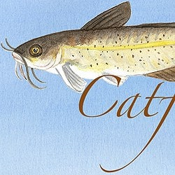 Casart coverings Element: Catfish no. 10 – Gulf Coast Design_water and wording