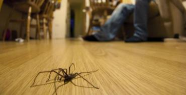 10-house-spiders-to-watch-out-for-in-your-home-136400366409303901-150914141435