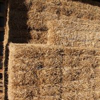 Horse Stall Bedding - Cashmans