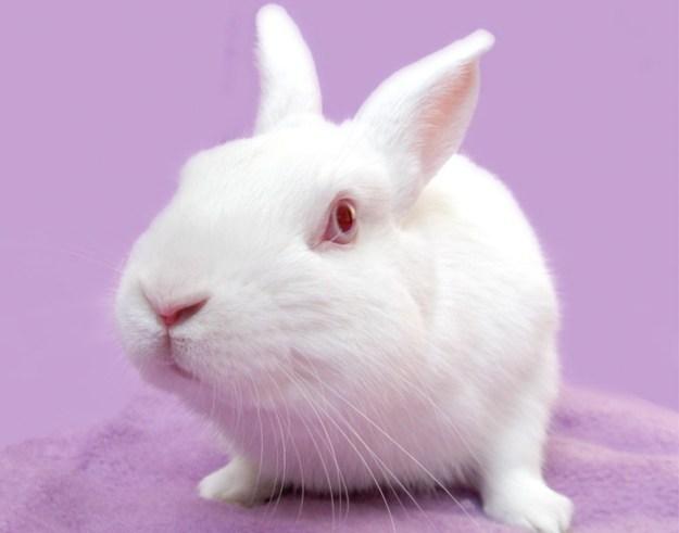Adorable photo of a white bunny rabbit.