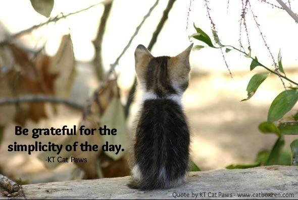 Zen Quote Wallpapers Cat Box Zen Humor Zen Amp Lots Of Cats