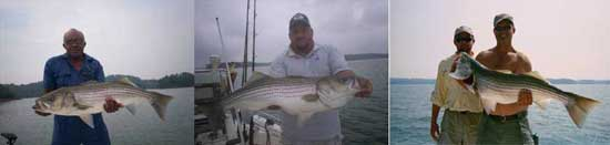 Trophy striped bass.