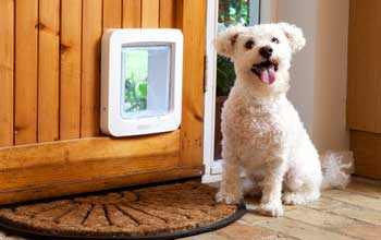 dog with microchip door