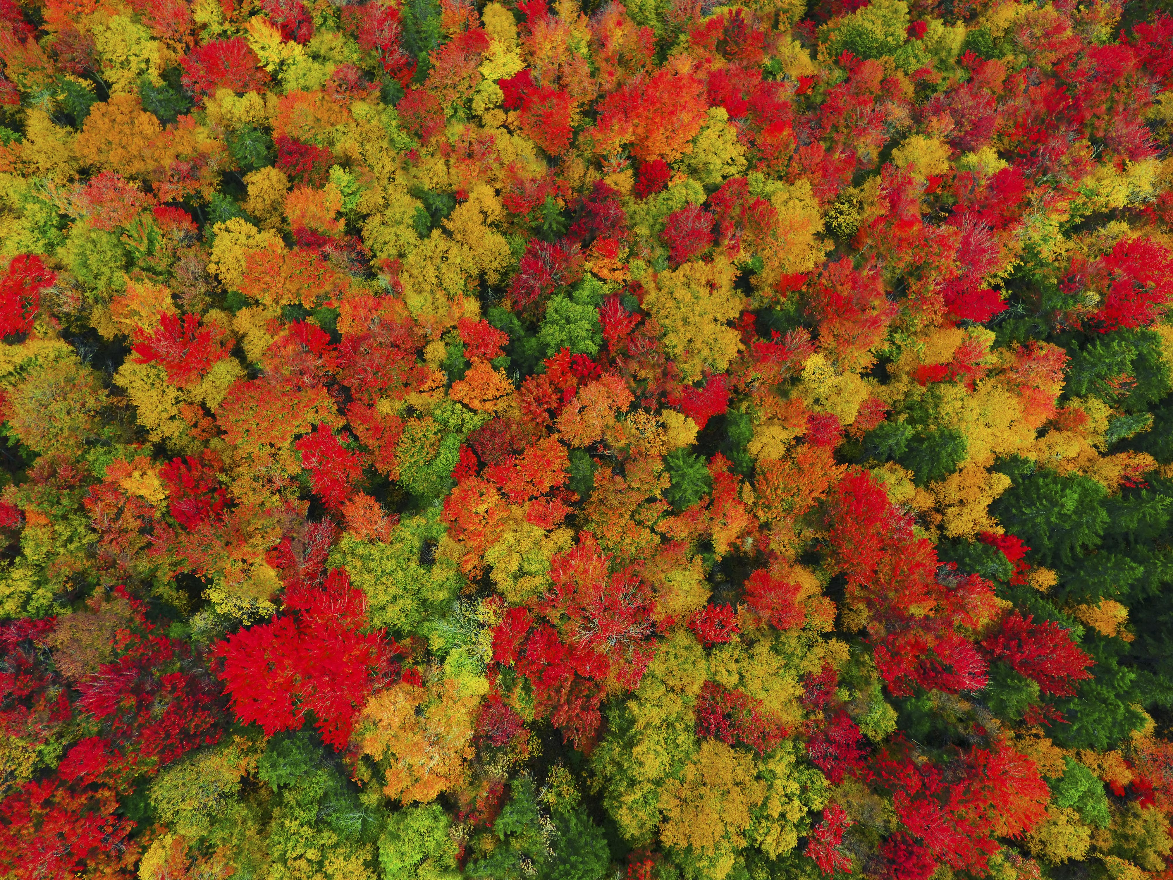 National Geographic Fall Wallpaper Aerial Images Capture Beautiful Autumn Landscape Caters