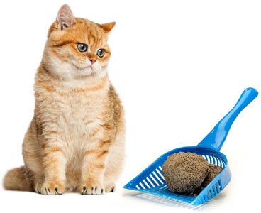 Tips For Good Litter Box Cleaning