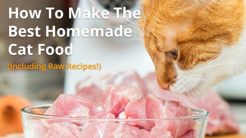 How to make homemade raw cat food the best cat 2018 34 best benefits of feeding homemade raw cat food images on forumfinder Gallery