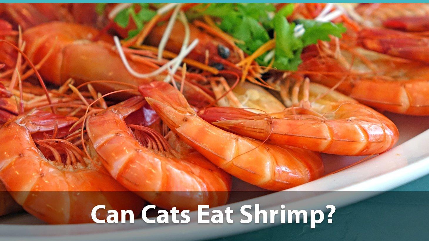 Fullsize Of Types Of Shrimp