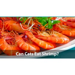 Small Crop Of Types Of Shrimp