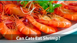 Small Of Types Of Shrimp