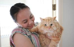 cats in care
