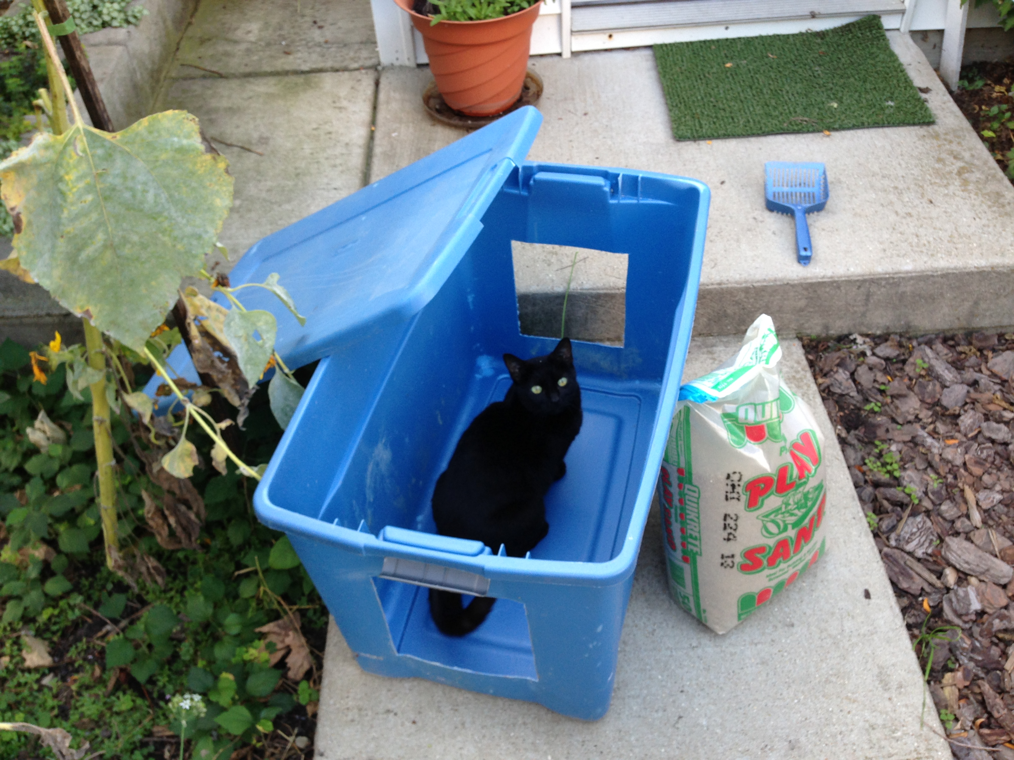 How To Make A Low Cost Outdoor Cat Litter Box Cats In My