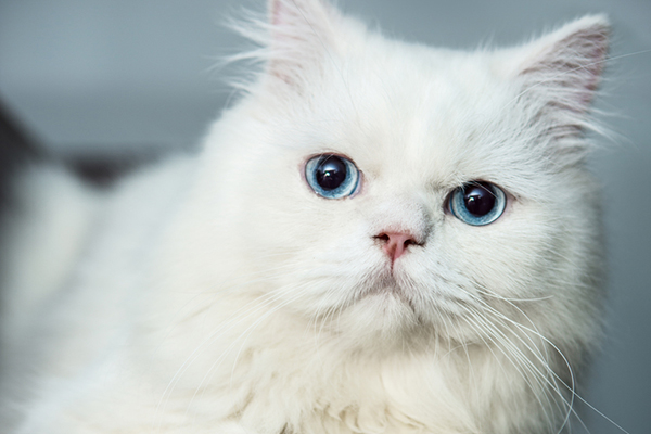 The Fascinating Facts Behind Cat Colors - Catster