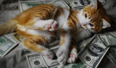 10 Cats Rolling Around in Cash - Catster