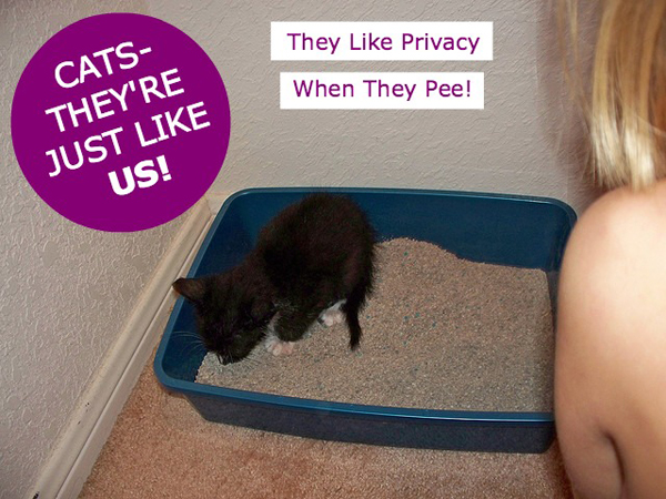 You Can Edit This How To Make My Cat Use The Litter Box Giant Cat Litter  Box Made Out Of Rubbermaid Storage Bin Image Using This Ivoiregion Tool  Before Save ...