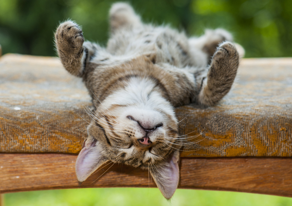 Cat Sleeping Positions What Does Your Kittys Favorite
