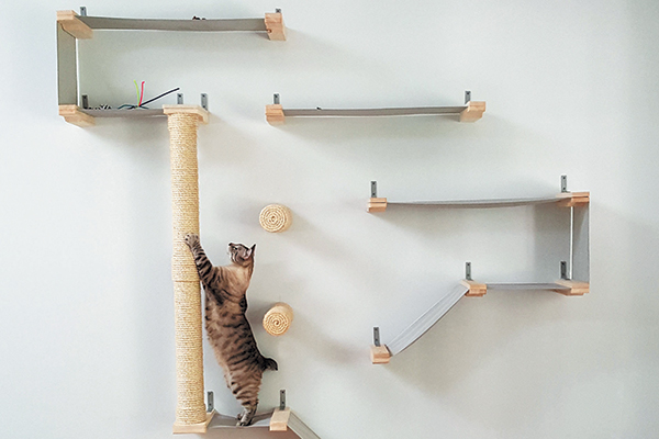 How To Create A Cat Climbing System In Your Home Catster