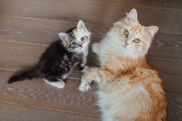 When Do Cats Stop Growing? Here\u0027s When Cats Reach Their Full Size