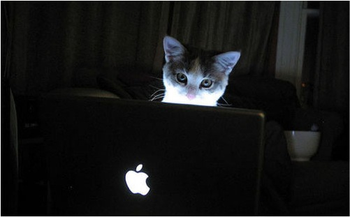 Cute Cat Gif Wallpaper Why Hire Technology Cats Glad You Asked Cats Vs Cancer
