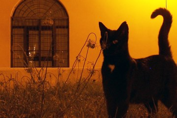 kattenluikjes