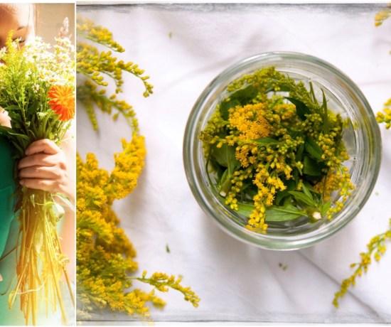 Sommerblume goldrute