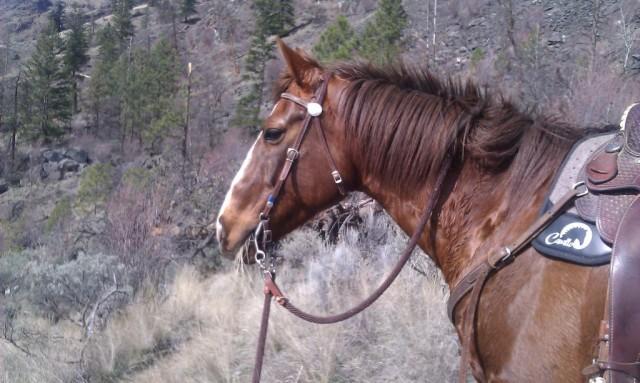 Cavallo Bridge Saddle Pad Horse Boots Hoof Boots