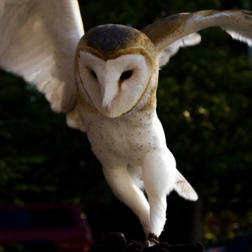 Wildlife Rehabilitation and Release has a new website!