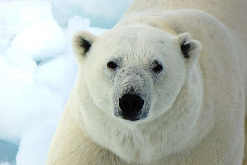 Cute Asian Wallpaper 5 Cool Canadian Animals Explore Awesome Activities