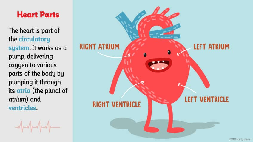 How does your heart work? Explore Awesome Activities  Fun Facts